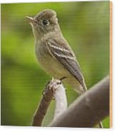 Pacific-slope Flycatcher Wood Print
