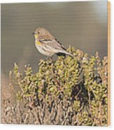 Pacific Sloped Flycatcher Wood Print