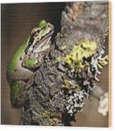 Pacific Treefrog Wood Print