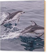 Pacific White Sided Dolphins Wood Print