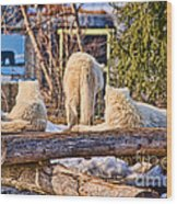 Pack Of Arctic Wolves Watching A Polar Bear Movie Wood Print