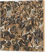 Pack Of Hound Dogs Wood Print