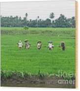Paddy Field Workers Wood Print