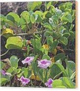 Padre Flowers Wood Print