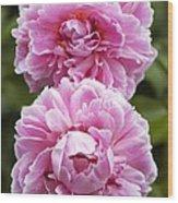 Paeonia Lactiflora 'sarah Bernhardt' Wood Print