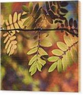Paint  Wood Print