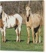 Paint And Palomino Mustang Wood Print