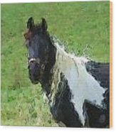 Paint Horse In Field Wood Print