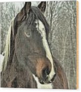 Paint Horse In Winter Wood Print