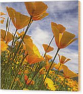 Paint The Desert With Poppies  Wood Print