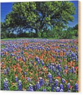 Paintbrush And Bluebonnets - Fs000057 Wood Print by Daniel Dempster