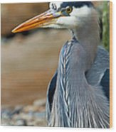 Painted Blue Heron Wood Print