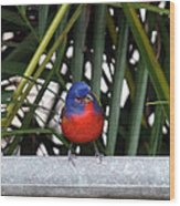 Painted Bunting Bird Wood Print