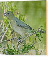 Painted Bunting Hen Wood Print