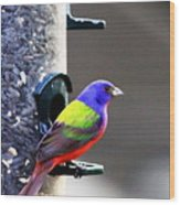 Painted Bunting - Img 9757-002 Wood Print
