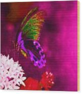 Painted Buterfly Wood Print