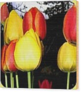 Painted Country Tulips Wood Print