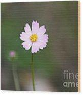 Painted Desert Floral Wood Print