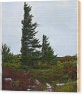 Painted Flagstaff Wood Print
