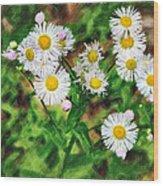 Painted Fleabane Wood Print