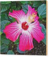 'painted Lady' Hibiscus Wood Print