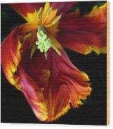 Painted Parrot Petals Wood Print