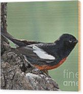 Painted Redstart Myioborus Pictus Wood Print