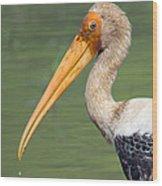 Painted Stork Mycteria Leucocephala Wood Print