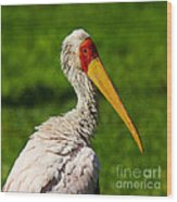 Painted Stork Wood Print