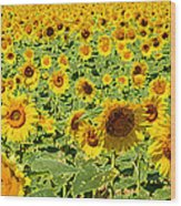 Painted Sunflower Field Wood Print