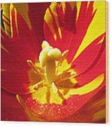 Painted Tulip Wood Print