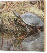 Painted Turtle Climbing Onto Shore Wood Print