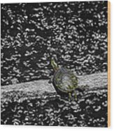 Painted Turtle In A Monochrome World Wood Print