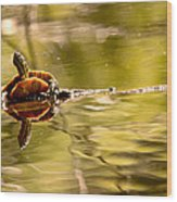 Painted Turtle Wood Print