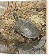 Painted Turtle Reflected In Water Wood Print