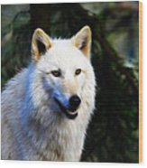 Painted White Wolf Wood Print