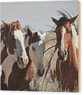 Painted Wild Horses Wood Print