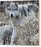 Painted Wolf Wood Print