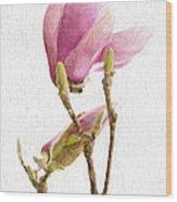 Painterly Pink Magnolia Wood Print