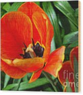 Painterly Red Tulips Wood Print