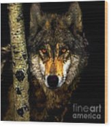 Painting ... Wolf In Aspen Grove Wood Print