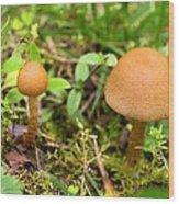 Pair O Mushrooms Wood Print