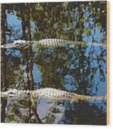 Pair Of American Alligators Wood Print