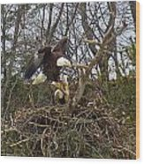 Pair Of Bald Eagles At Their Nest Wood Print