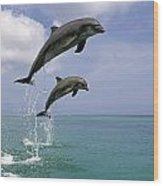 Pair Of Bottle Nose Dolphins Jumping Wood Print