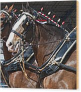 Pair Of Budweiser Clydesdale Horses In Harness Usa Rodeo Wood Print