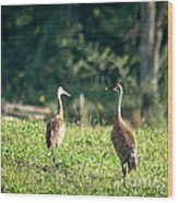 Pair Of Cranes Wood Print