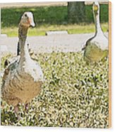 Pair Of Geese Wood Print by Artist and Photographer Laura Wrede
