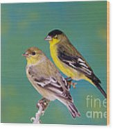 Pair Of Lesser Goldfinches Wood Print