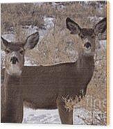 Pair Of Mule Deer   #7584 Wood Print
